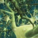 neurons.1