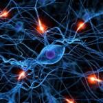 neurons.2