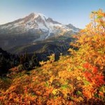 autumn.rainier